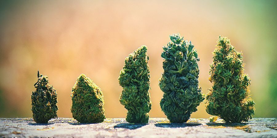 GROTERE, BETERE CANNABIS TOPPEN
