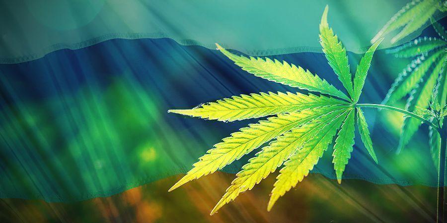 Oorsprong van Cannabis ruderalis