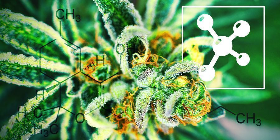 Cannabinoïden