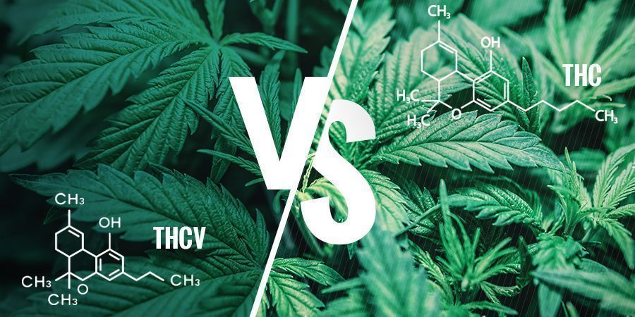 THCV versus THC: Wat zijn de verschillen?