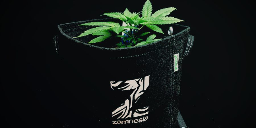 Stoffen Potten Of Smart Pots Cannabis