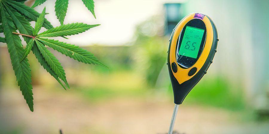 Cannabis Op Rockwool Kweken: GROEIPERIODE