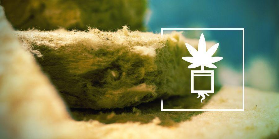 Cannabis Op Rockwool Kweken