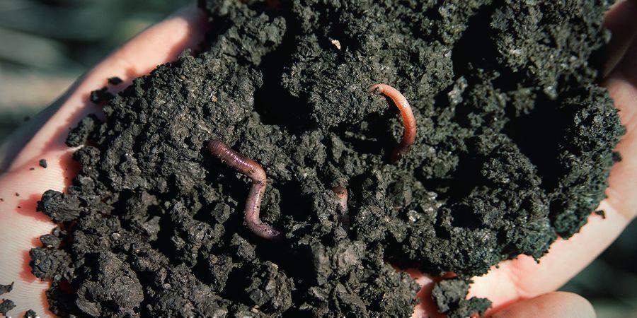 Wat Is Biologische Super Soil?
