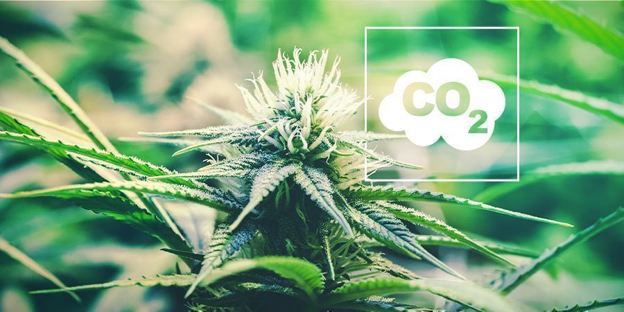 CO₂ En Cannabis