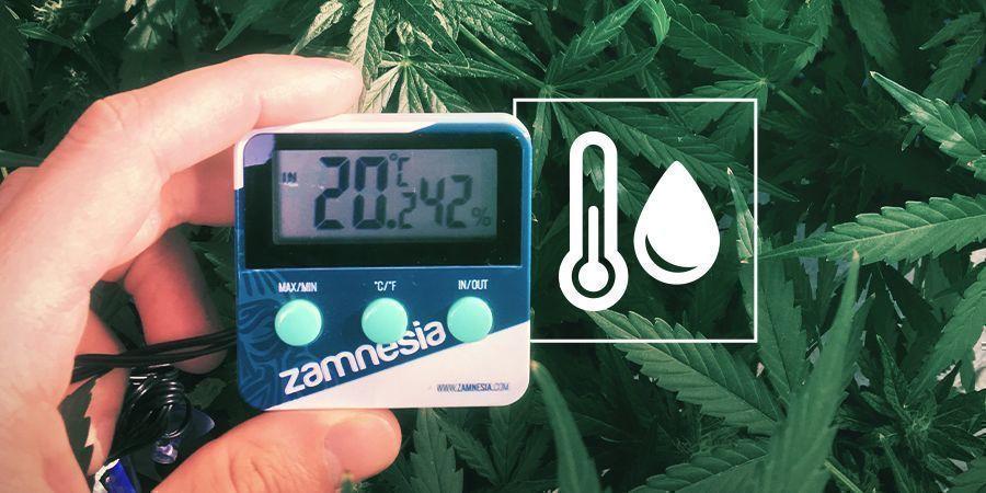 Luchtvochtigheid In De Cannabis Kweekruimte