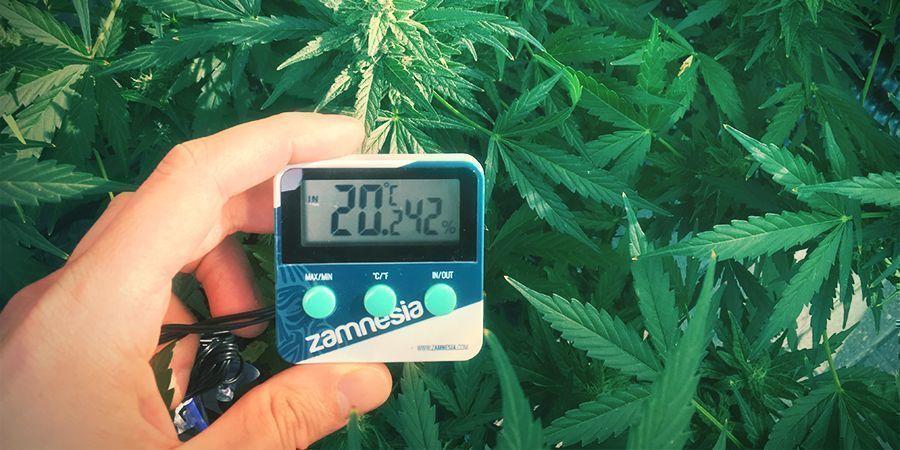 Optimale Temperatuur Voor Het Verbouwen Van Cannabis