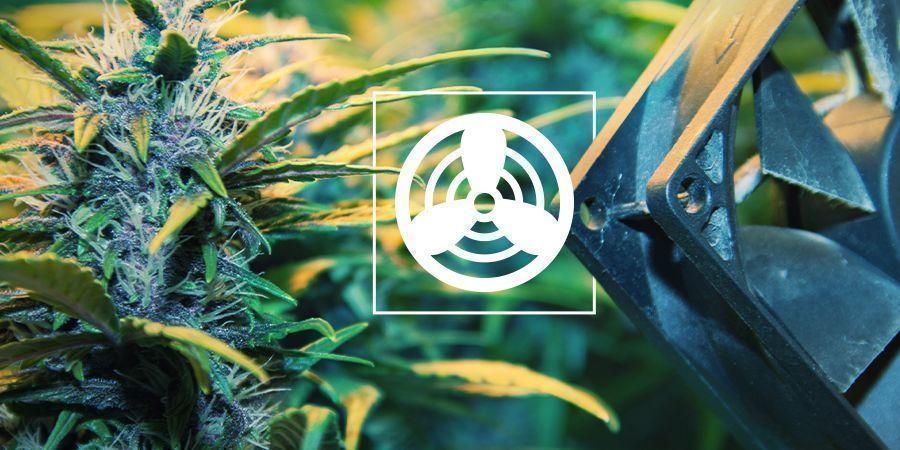 Ventilatie In Je Cannabis Kweekruimte