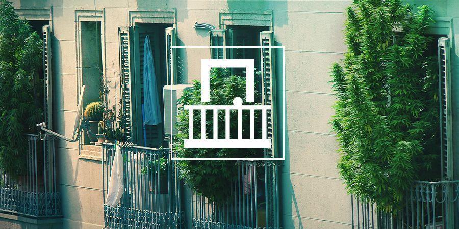 Cannabis Kweken Op Je Balkon Of Terras