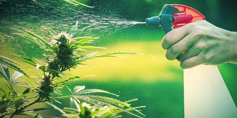 Voor- En Nadelen Van Wiet Kweken In De Tuin
