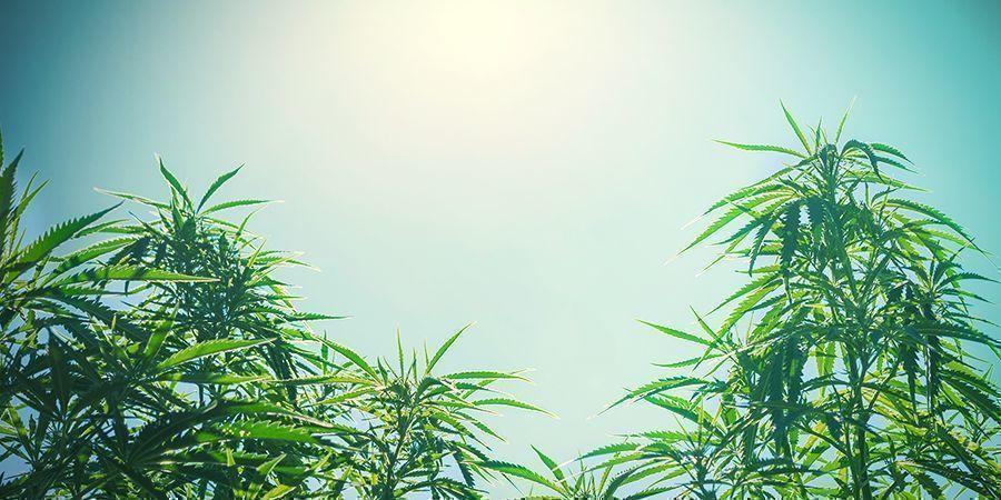 De Grootte Van De Planten