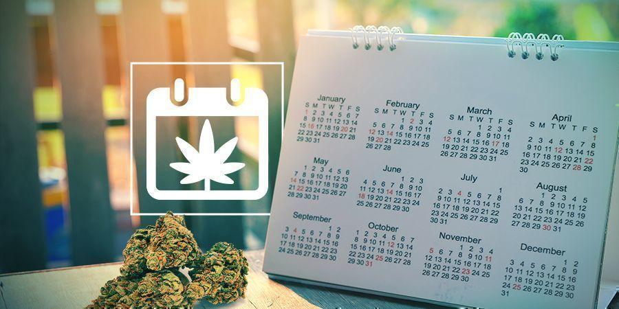 Zamnesias Outdoor Cannabis Grow Calendar HEADER CMS
