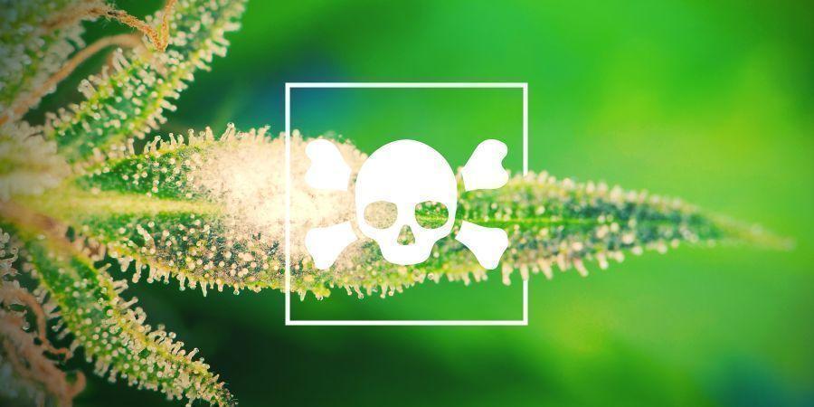 Cannabis Ziektes