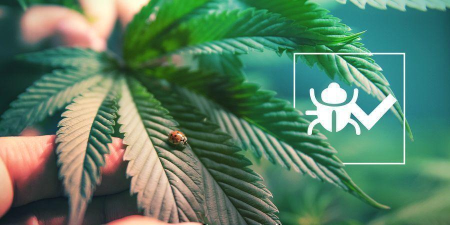 Vriendelijke Insecten En Beestjes
