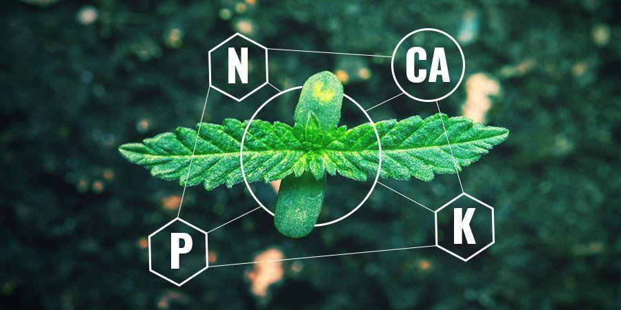Calcium in chemische versus biologische meststof
