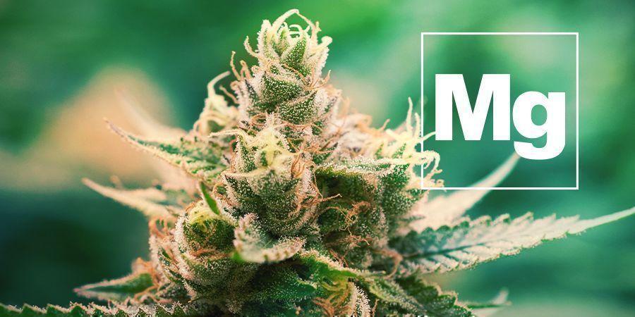 Magnesium En Cannabis Planten
