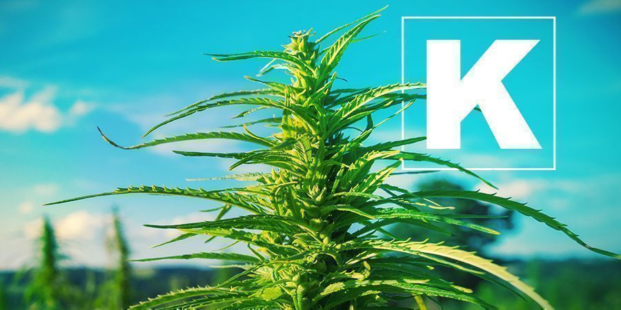 Kalium En Cannabis Kweken
