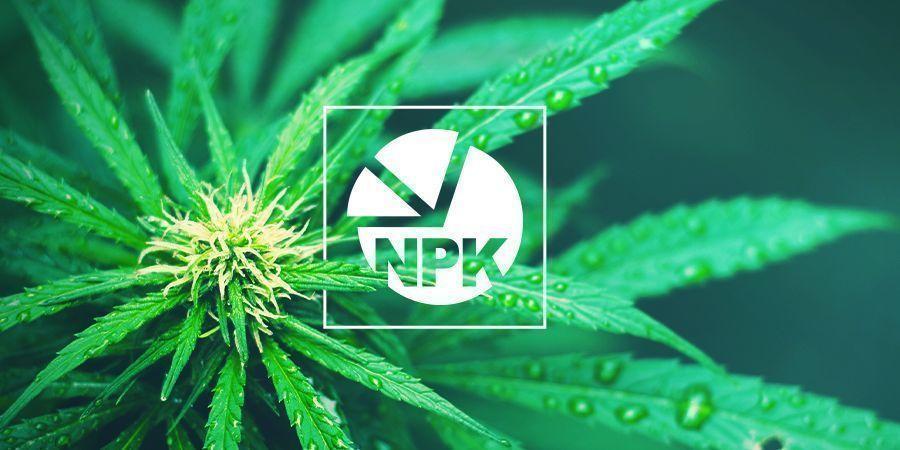 NPK: Wat Is De Beste Verhouding Voor Cannabiskweek?