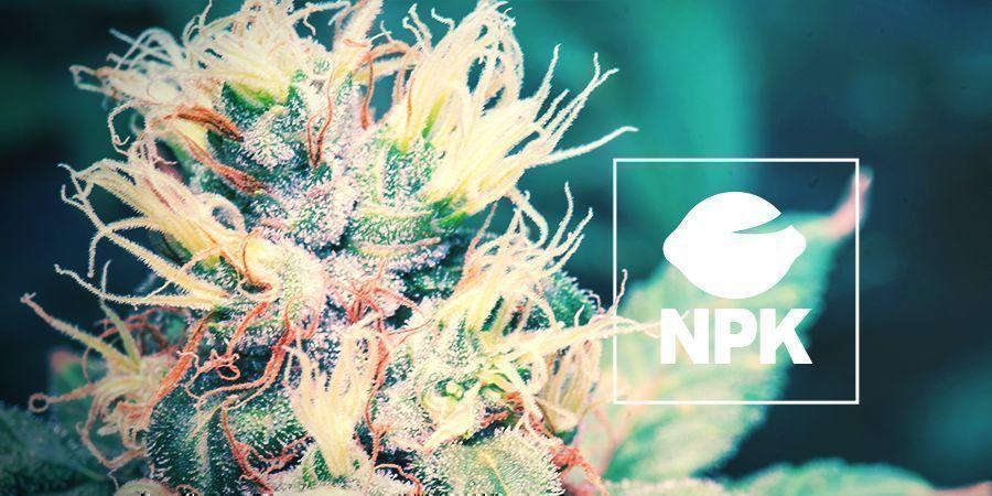 Waarom Hebben Cannabisplanten Voedingsstoffen Nodig?