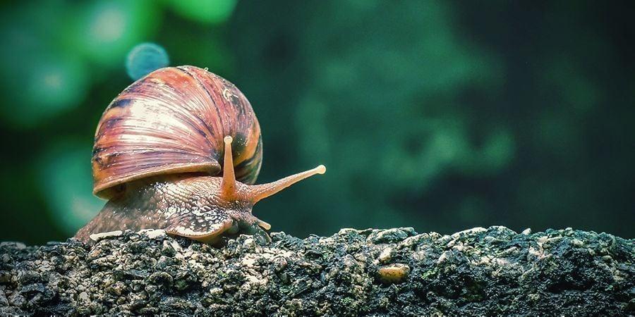 Slakken & Naaktslakken