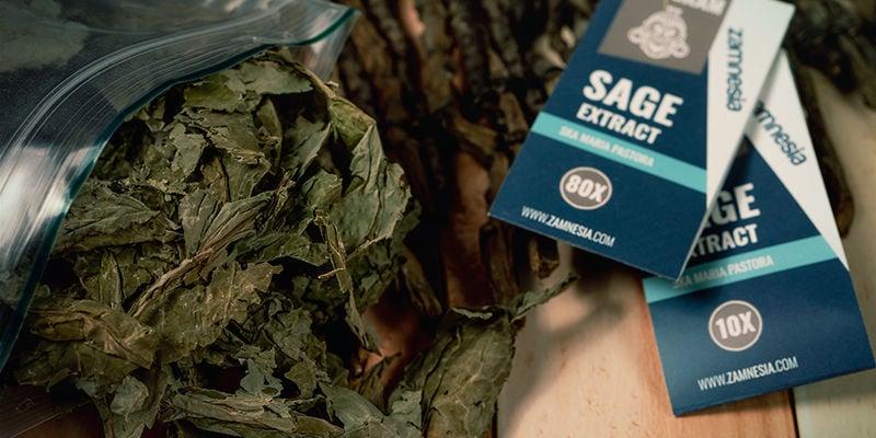 Hoe werkt Salvia divinorum?
