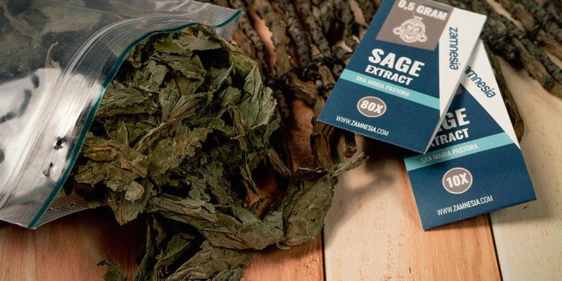Welke Soorten Salvia Zijn Er?
