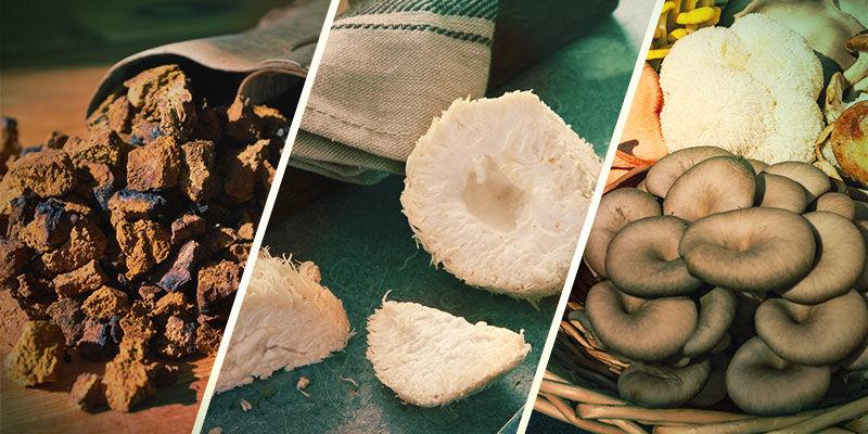 Welke paddenstoelen zijn een adaptogeen?
