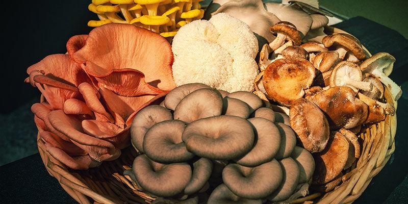 Welke paddenstoelen worden vaak voor tincturen gebruikt?
