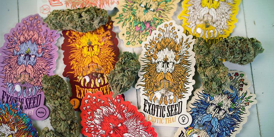 Exotic Seed wietzaadjes verpakking