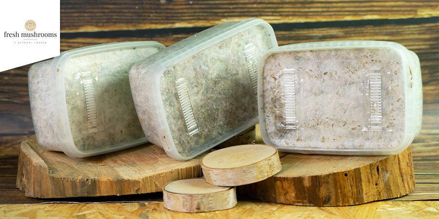 Paddo Grow Kits Fresh Mushrooms