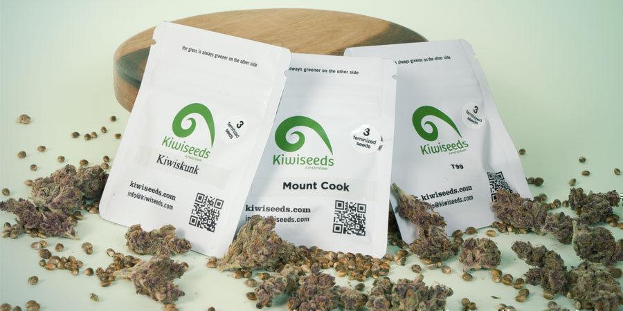 Wat Zijn De Beste 3 Wietzaadjes Van Kiwi Seeds?