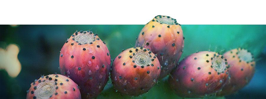 De Ultieme Mescaline Cactus Gids