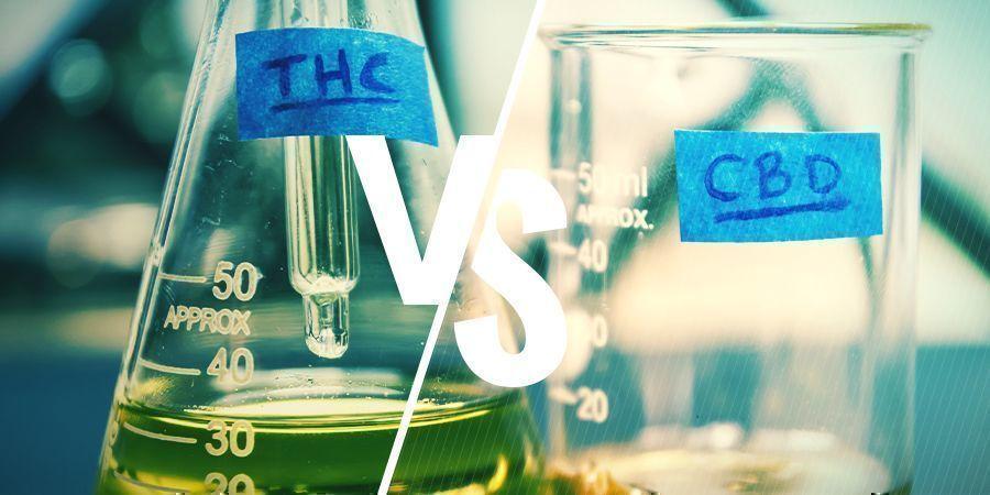 WAT IS HET VERSCHIL TUSSEN THC EN CBD?