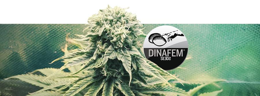 Informatie Over Dinafem