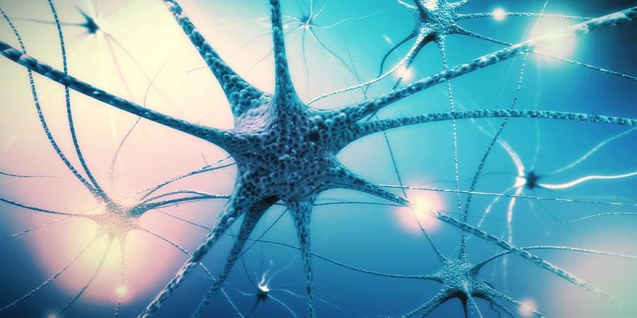 Stap 4: Onderhoud het zenuwstelsel