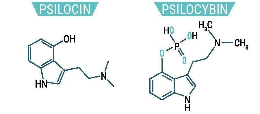 Psilocybine & Psilocine
