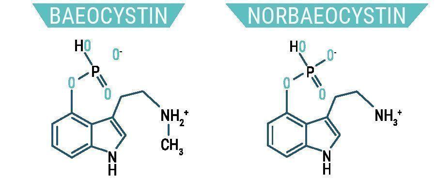 Baeocystine & Norbaeocystine
