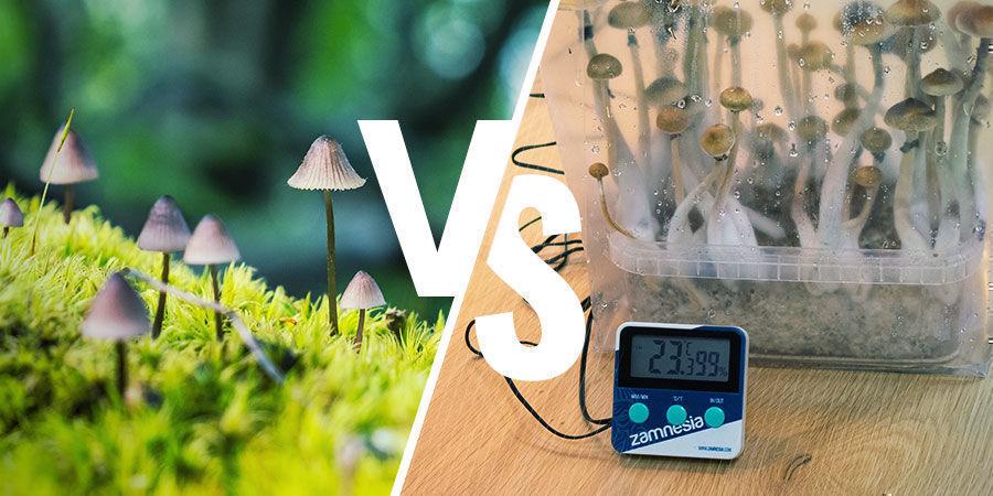 Paddo's binnen versus buiten kweken