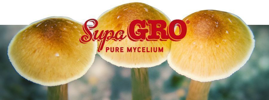 Supa Gro Magic Mushroom Grow Kits