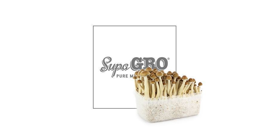 Supa Gro - Golden Teacher