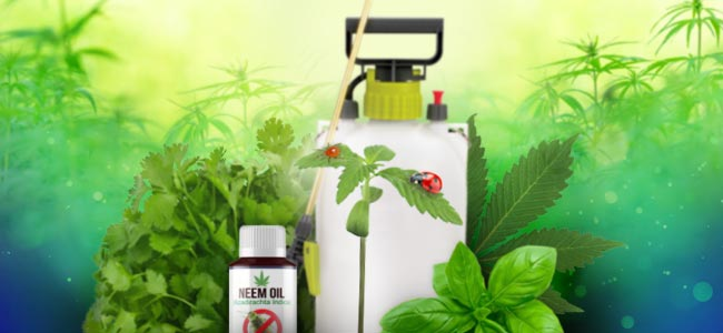 Natuurlijke Plantenverzorging