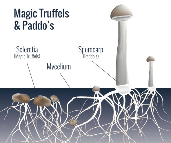 Magic Truffels en Paddo's