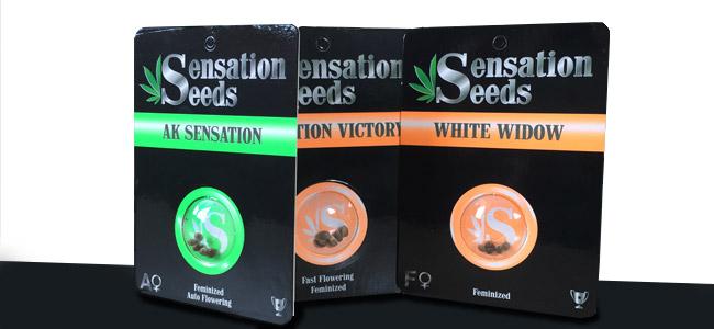 Verpakkingen van Sensation Seeds