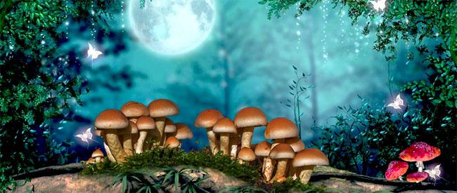 Paddo's in een bos