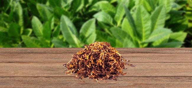 Tobacco (Tabak)