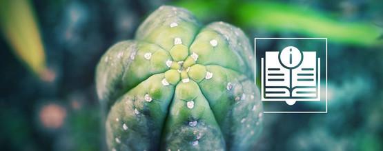 Een Gids Over De San Pedro Cactus