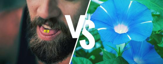 LSA vs LSD – Het Verschil