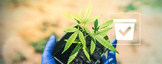 De Juiste Pot Voor Je Cannabis Plant Kiezen