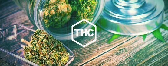 Alles Wat Je Moet Weten Over THC