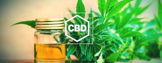 Alles Wat Je Moet Weten Over CBD en CBD-Rijke Cannabis